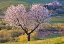 Czy warto zaplanować posadzenie drzewa?